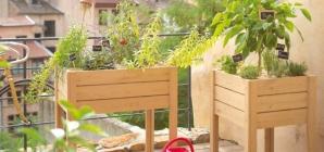 Les plantes idéales pour votre balcon