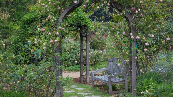 Treillis de Jardin : Notre Guide d'Installation