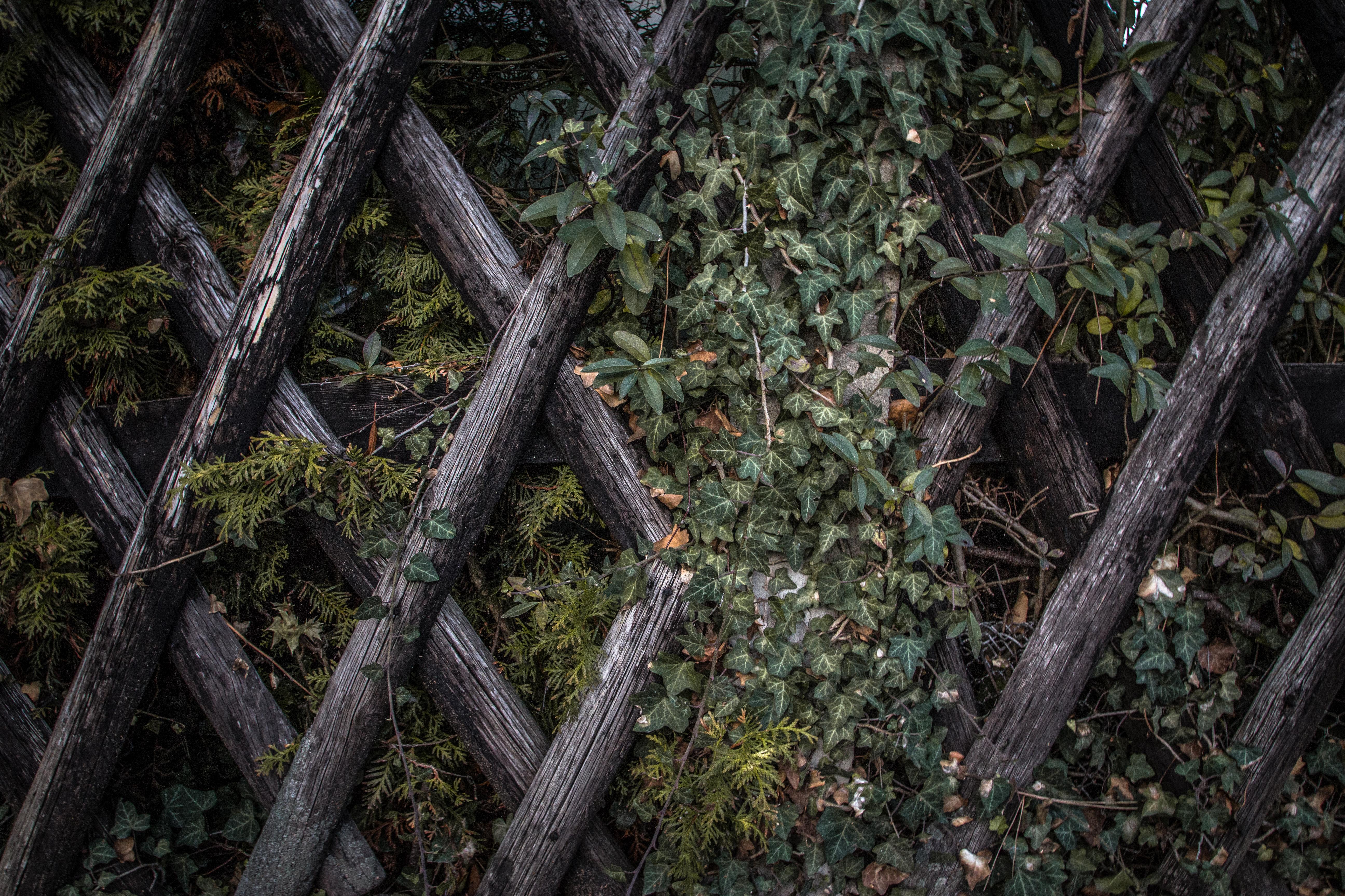 Fabriquer Treillis Bois Pour Plantes Grimpantes comment installer du treillis : notre guide en 3 étapes !