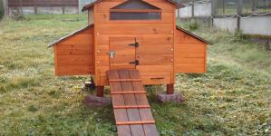 Poulailler : conseils pour le construction et l'entretien !