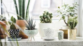 Plantes d'intérieur : quelles plantes pour décorer sa maison ?