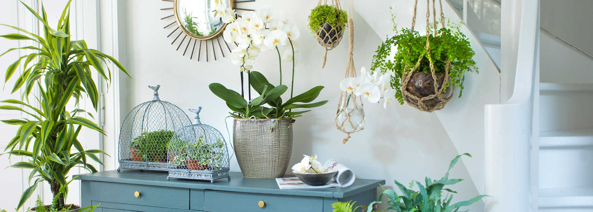 Livraison plantes