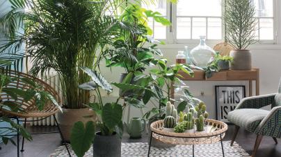Plantes d'intérieur : quelles plantes choisir pour décorer sa maison ?
