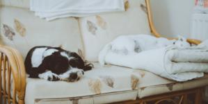 Comment améliorer la qualité d'air dans une maison ?